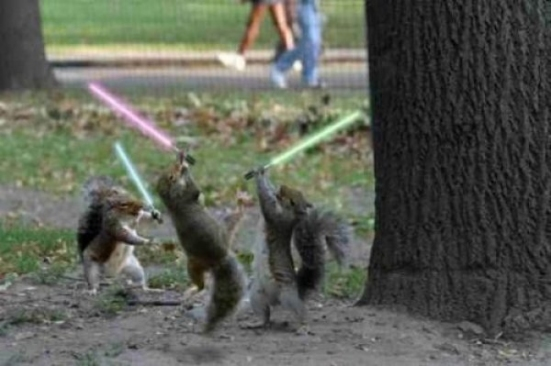 squirrel-jedi-lightsaber-duel